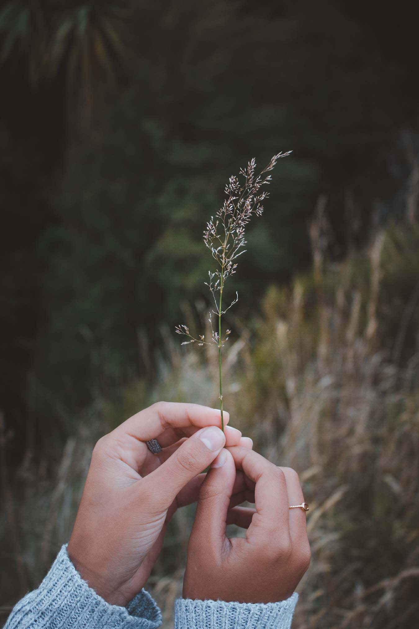 Two tender female hands holding looking at a meadow herb