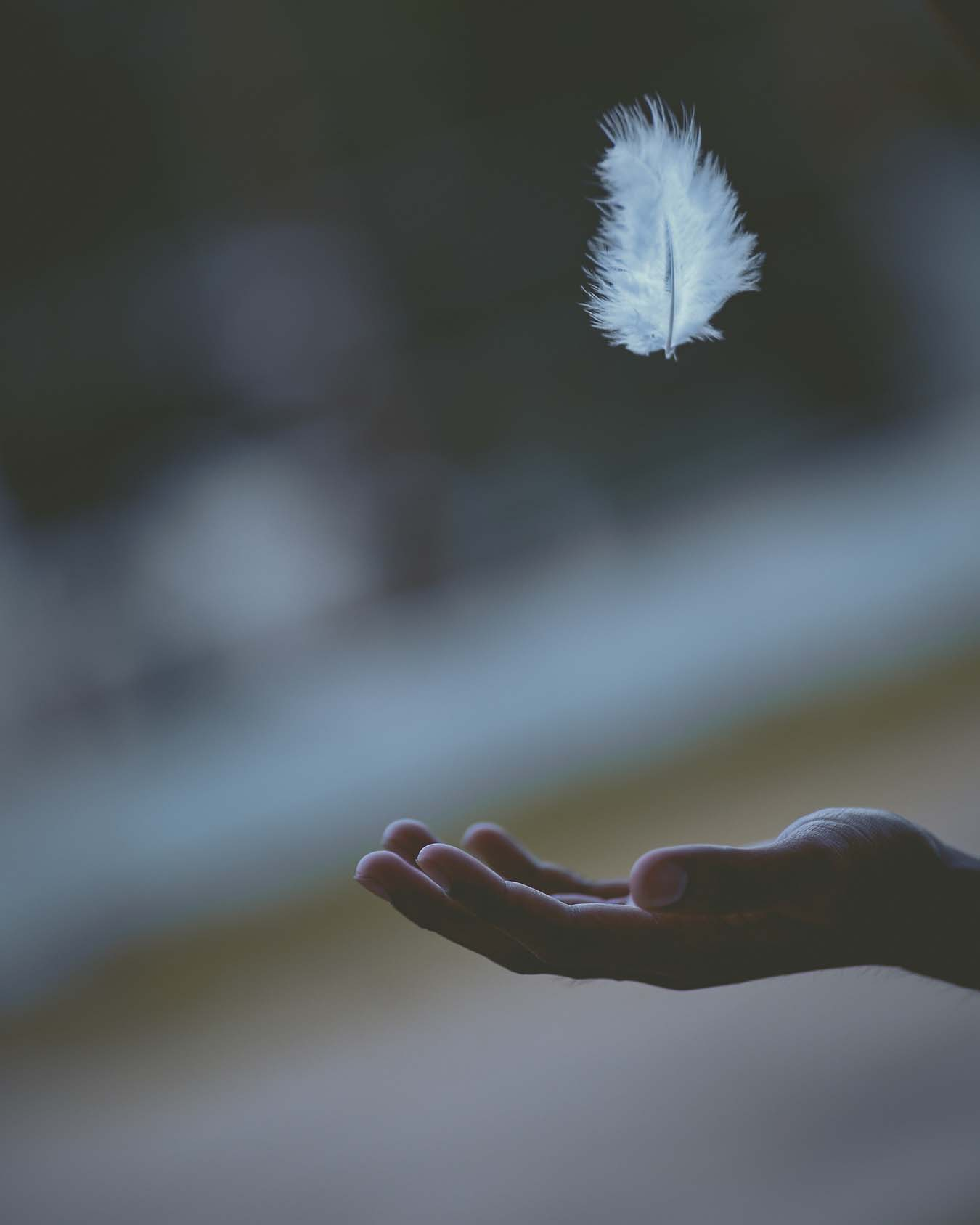 A feather glides in the air and a hand waits for it to fall.