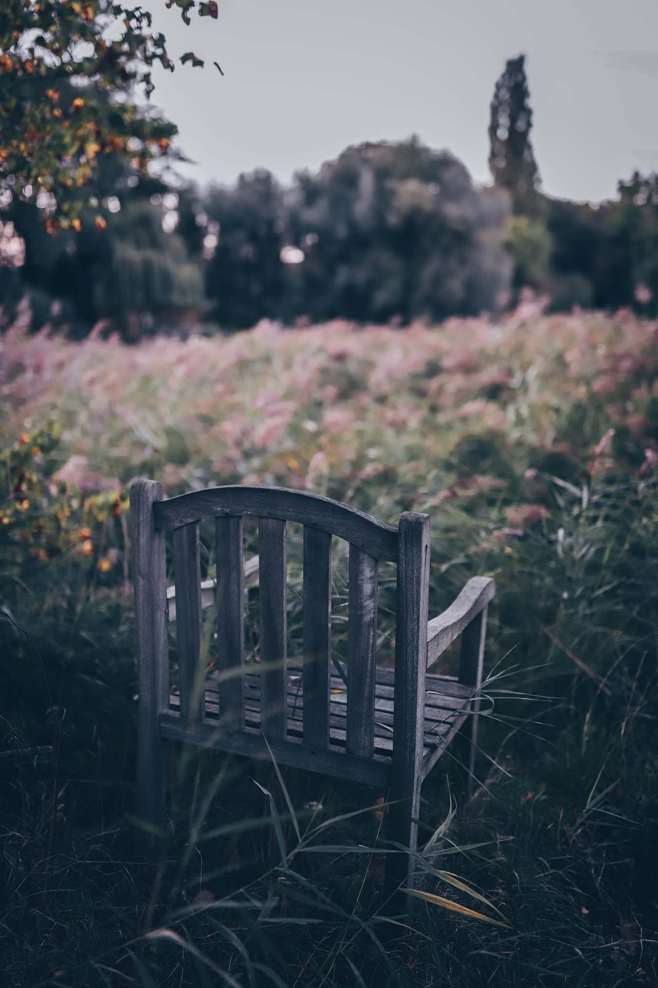 An old chair is in a wild garden.