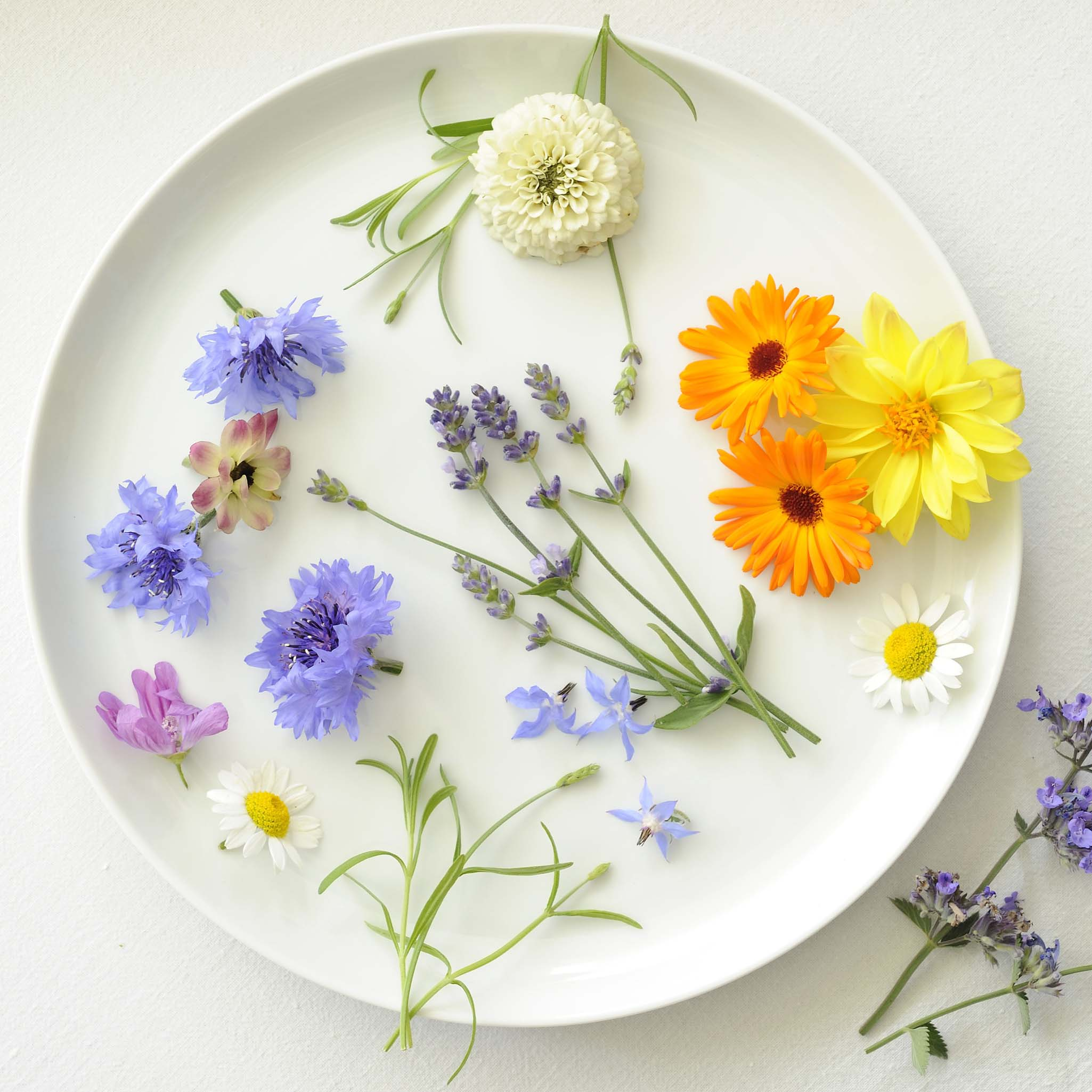 colourful eatable flowers arranged on white plate